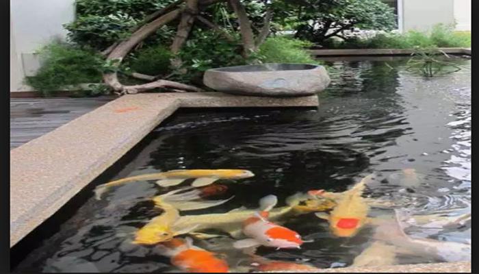 Cara Membuat Filter Air Kolam Ikan Supaya Air Kolam Jernih Padang Time
