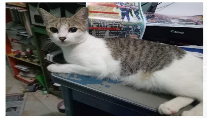 Nama Kucing Yg Bagus Dalam Islam 81021 Nama Untuk Kucing Comel Lucu Dan Unik